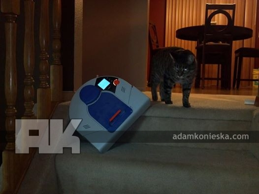 Pants the cat gets revenge on a vacuum